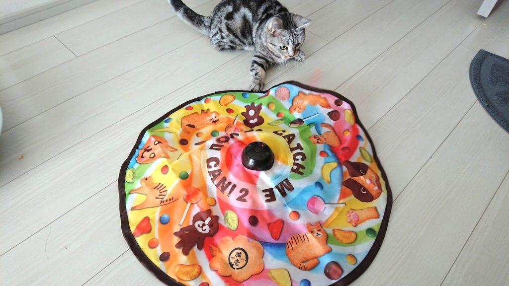 猫壱「キャッチ・ミー・イフ・ユー・キャン2」と遊ぶ猫その3。