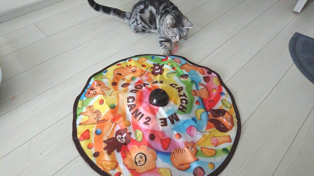 猫壱「キャッチ・ミー・イフ・ユー・キャン2」と遊ぶ猫その1。