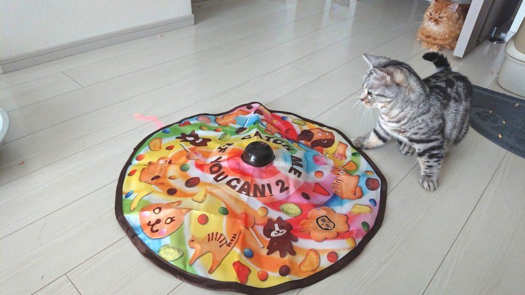 猫壱「キャッチ・ミー・イフ・ユー・キャン2」と遊ぶ猫その2。
