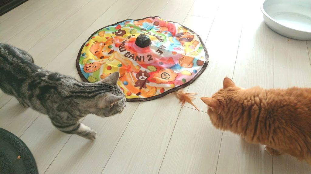 猫壱「キャッチ・ミー・イフ・ユー・キャン2」に興味津々の猫2匹。