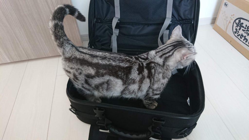 TANAX「ツアーシェルケース2」に猫が入るとこれくらい。