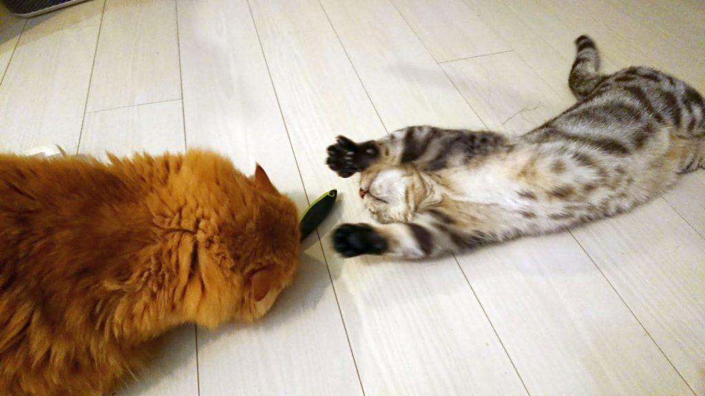 キャティーマン 「じゃれ猫 発見! またたび魚」を奪い合う猫。