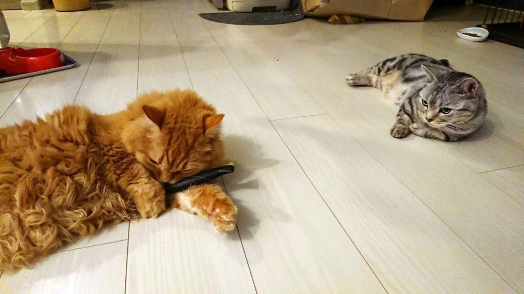 キャティーマン 「じゃれ猫 発見! またたび魚」を独り占めする猫。