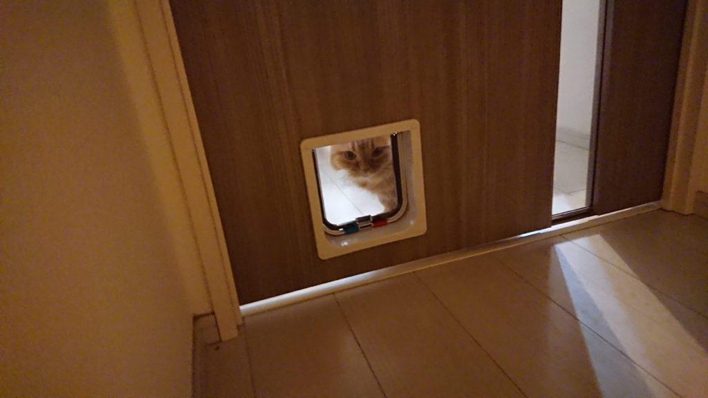 CEESC「4WAY ペットドア」を覗く猫。