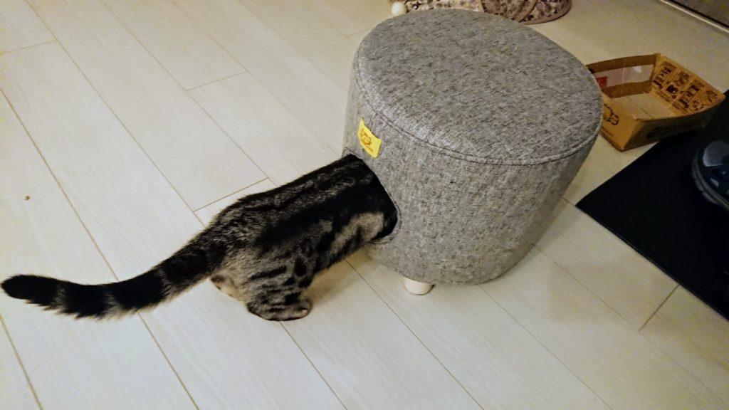 コジット「座れるキャットハウス」と灰色(1)。