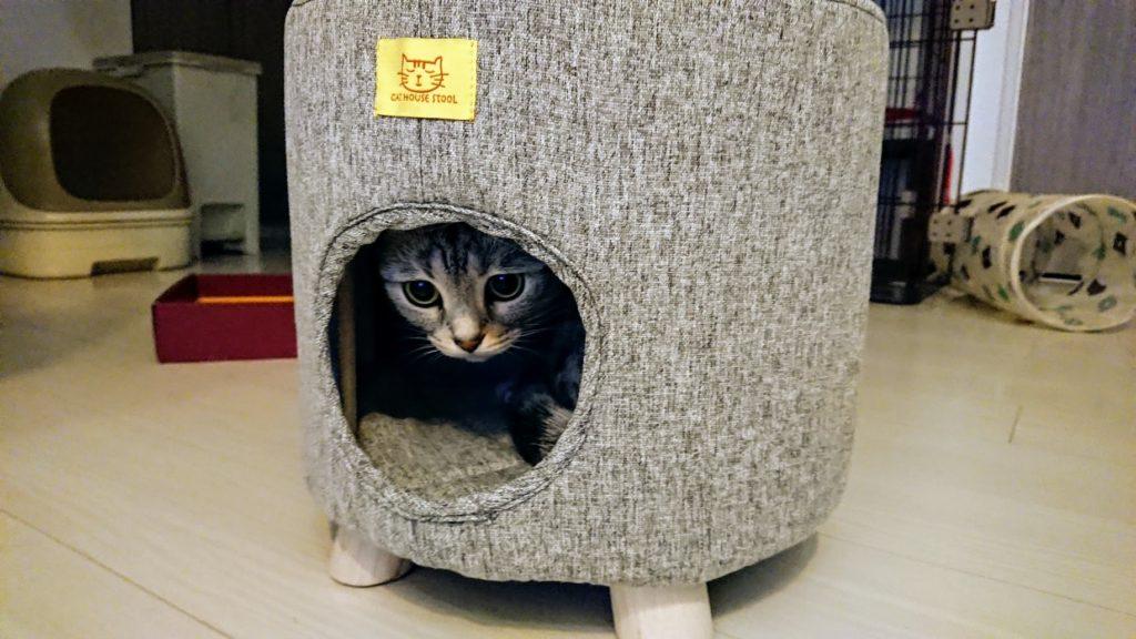 コジット「座れるキャットハウス」と灰色(2)。