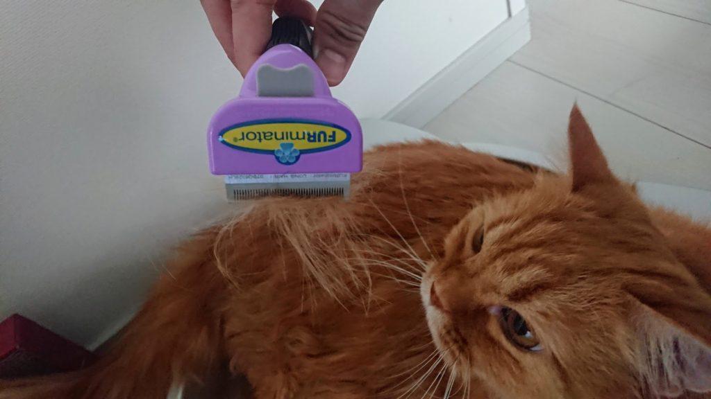 「ファーミネーター 小型猫S長毛種用」で結構毛が取れる。